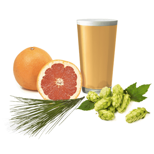 Pint glass with clear golden IPA and foreground grapefruit, hops and pine bough